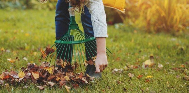 Rudeninis aplinkos tvarkymas: kokie darbai laukia?