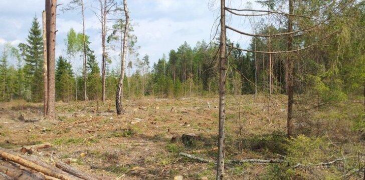 Iškirstas miško plotas
