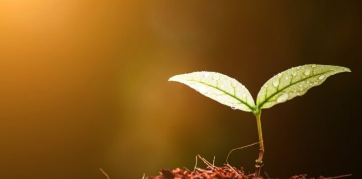 Kaip pasirinkti sėklas ir kodėl skiriasi jų kainos