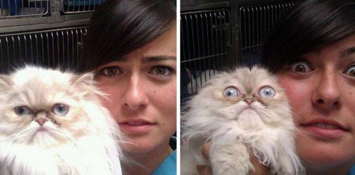 Katės pas veterinarą