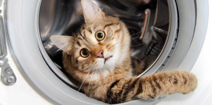 """JUOKINGA: 25 nuotraukos, kuriose <span style=""""color: #ff0000;"""">katės pagautos vagiliaujančios</span>"""