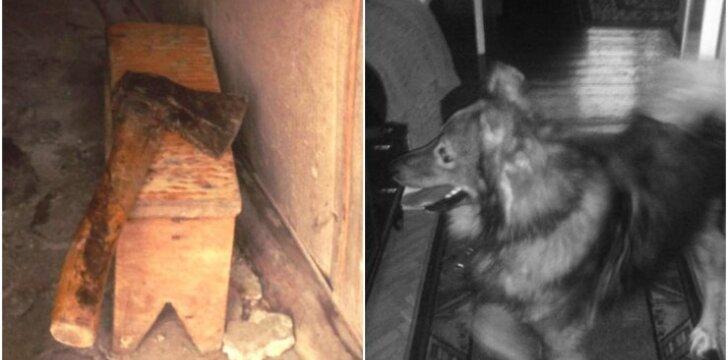 Užmuštas šuo