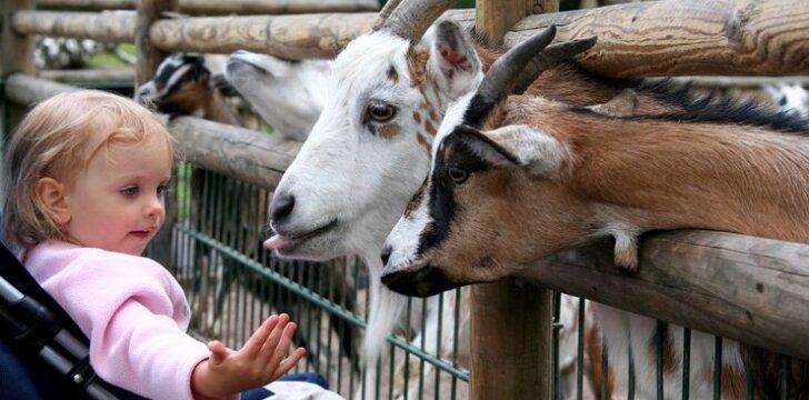 Zoologijos sodo gimtadienis ir kiti šio savaitgalio renginiai šeimoms su vaikais