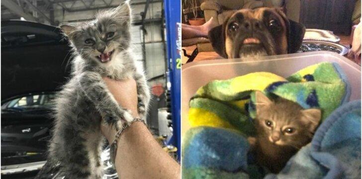 Šuns ir katytės draugystė