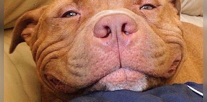 Šuo Metis