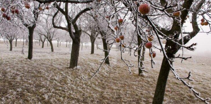 Sodo kenkėjai: kur jie slepiasi žiemą?