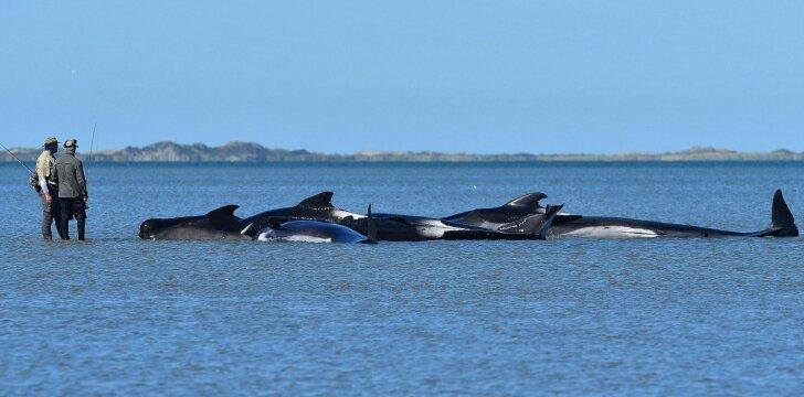 Banginiai