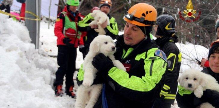 Iš griuvėsių išgelbėti šuniukai Italijoje