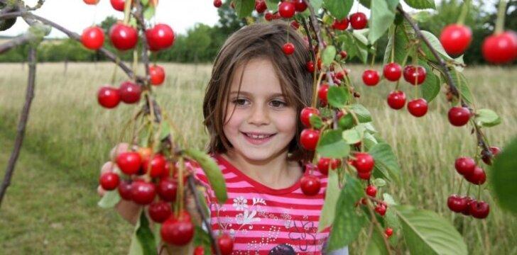 Vyšnių festivalis ir kiti šio savaitgalio renginiai