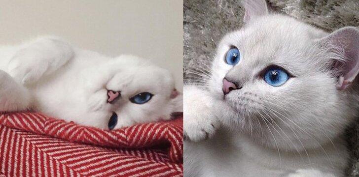 Pasaulį sužavėjusi katė