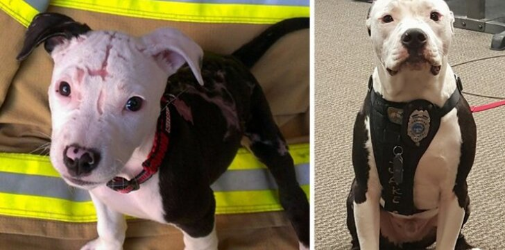 Iš gaisro išgelbėtas šuo tapo gaisrininkų padėjėju