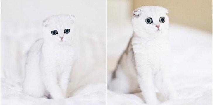 Katė Maisė