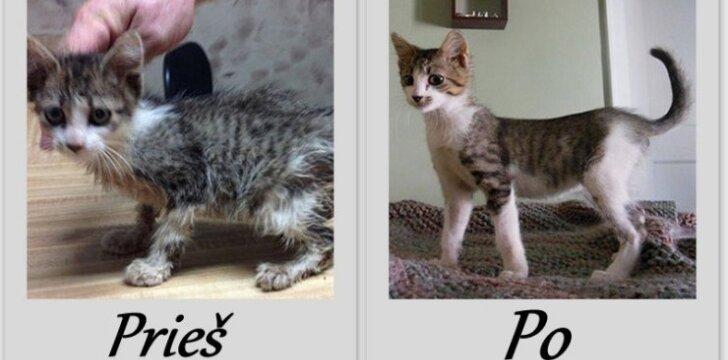Išgelbėtos katės