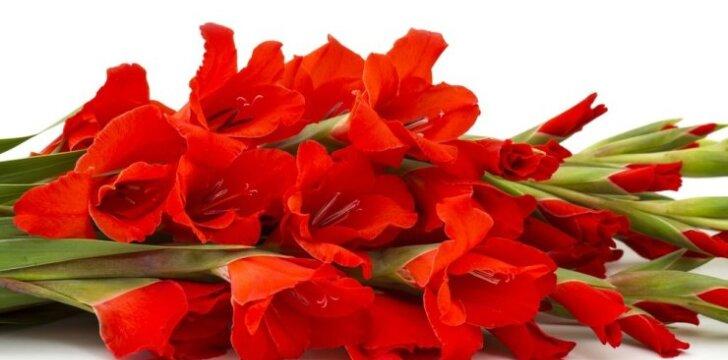 Svogūninės gėlės: iš rūsio – į gėlyną