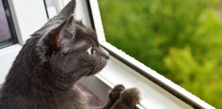 Drąsuolė katė apgynė namus nuo įsibrovusio lokio