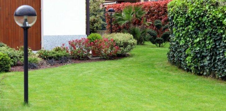 Kaip apsaugoti veją nuo ligų?