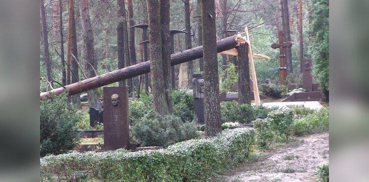 Kauniečiai įspėjami nepjauti nuvirtusių medžių