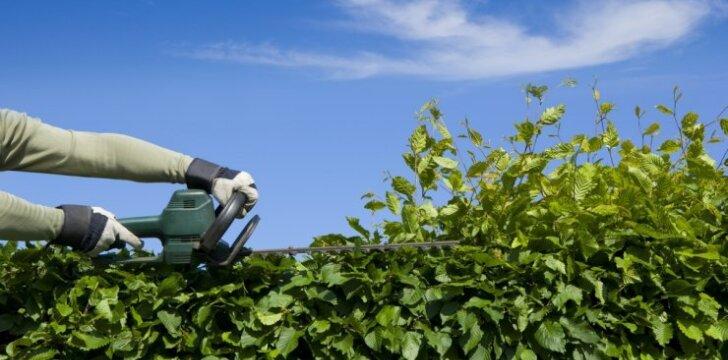 Kokiu atstumu nuo kaimyninio sklypo ribos turi būti sodinami medžiai, krūmai ir gyvatvorės?