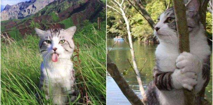 Garsiausias katinas Japonijoje