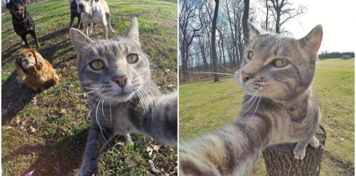 Katės asmenukės