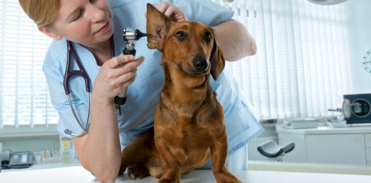 Ką daryti, kad veterinaras gyvūnui nekeltų baimės?