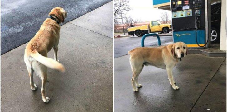 Šuo keliauninkas