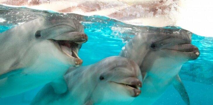 Delfinai naujose jūrų muziejaus patalpose