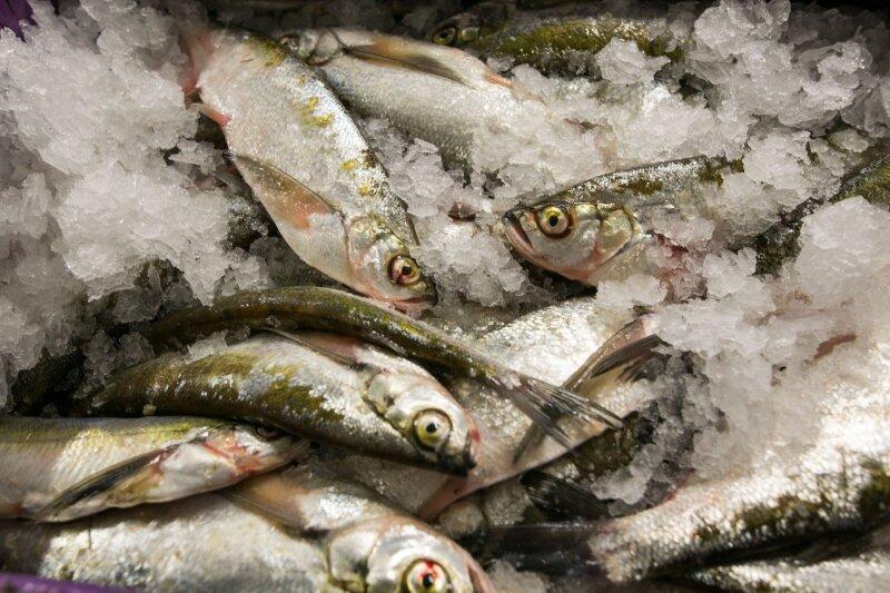 Šią klaidą daro kone visi: nustebsite, kaip reikia taisyklingai atšildyti žuvį