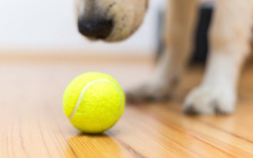 9 genialūs būdai kasdieniame gyvenime panaudoti teniso kamuoliuką