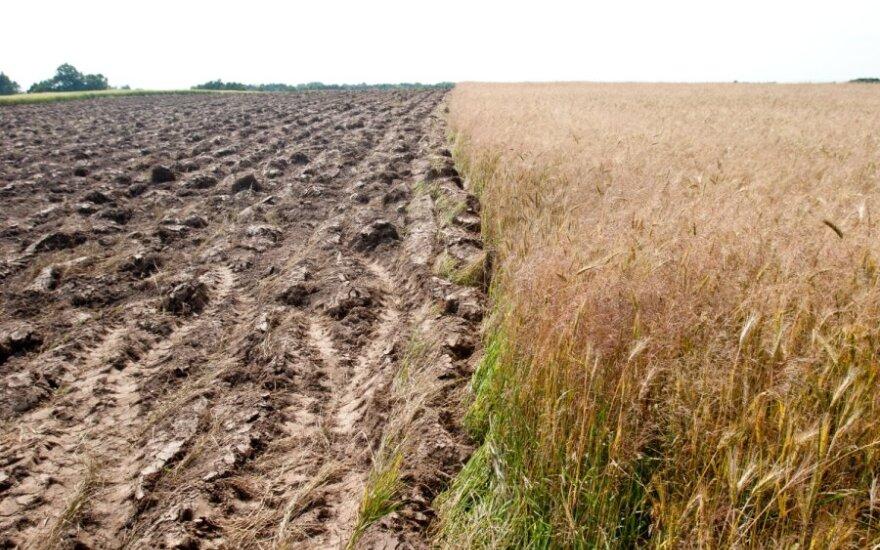Ūkininkų siaubai - ir besitęsianti šiluma, ir žiemiški šalčiai