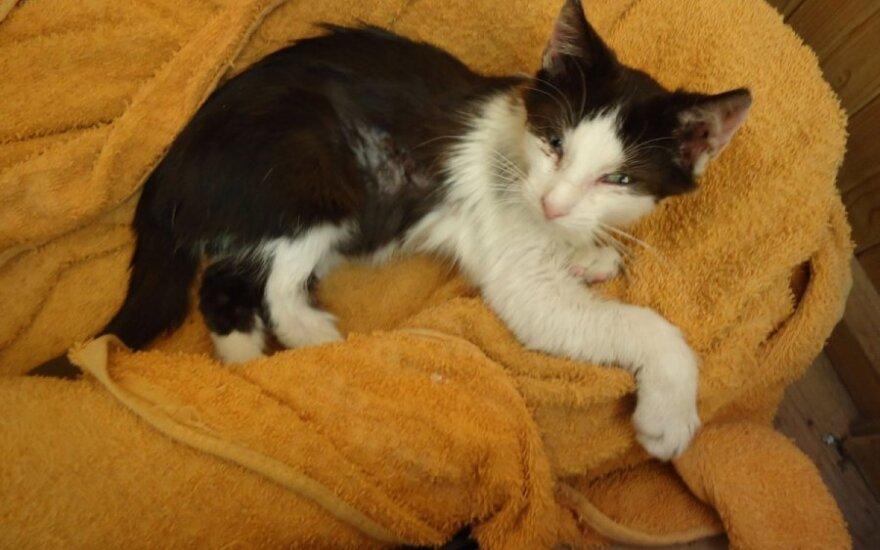 Gatvėje suspardytas katinėlis paliktas mirčiai!