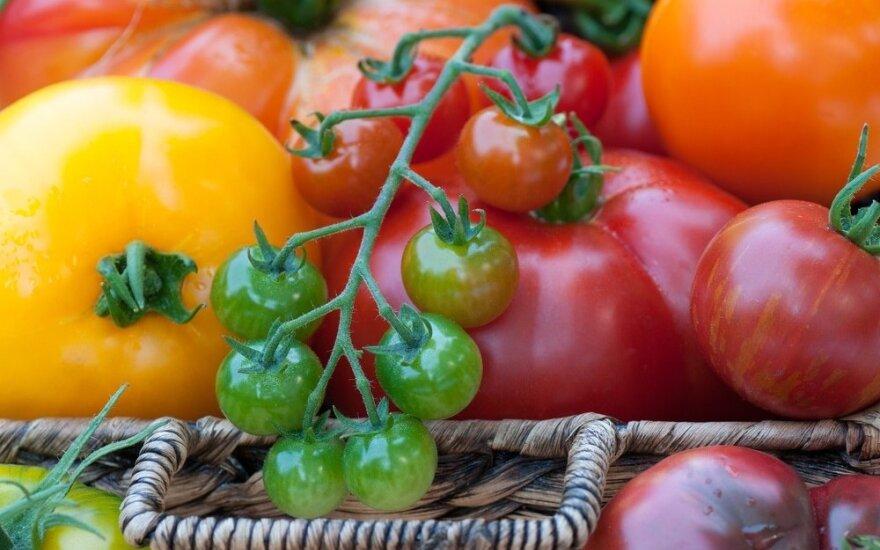 Daržininkės pomidorų kolekcijoje – daugiau nei 40 veislių