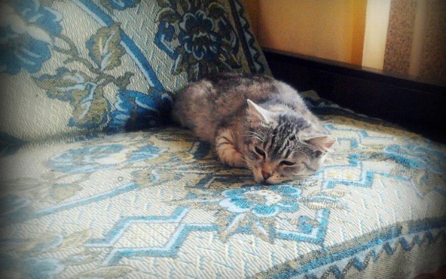 Katinėlis Rainius ieško šeimininkų