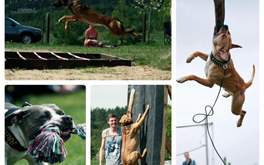"""""""Powerdog"""" šunų varžybos / S. Štabokaitės nuotr."""