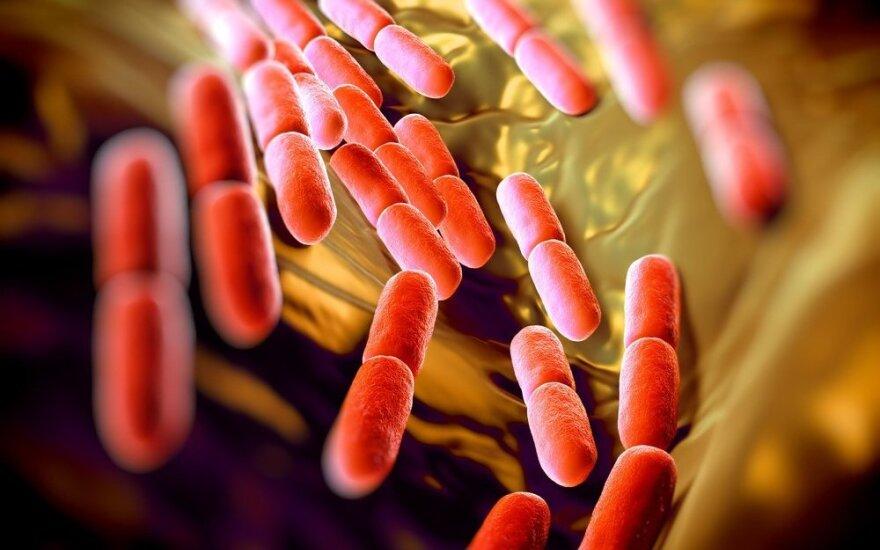 Daugiausiai bakterijų jūsų namuose yra ne ten, kur galvojate