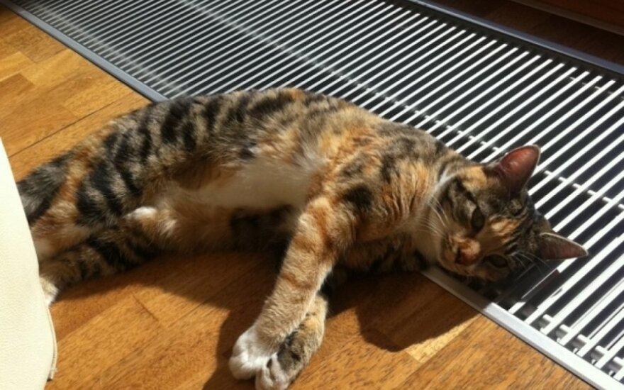 Padėkite surasti dingusią katytę