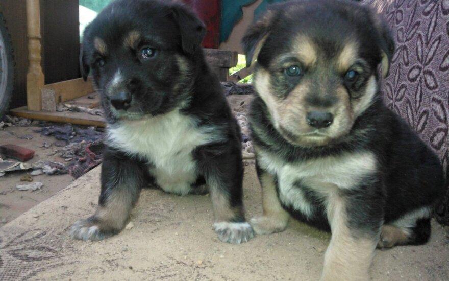 Mirčiai pasmerkta šunų šeimyna ieško saugių namų