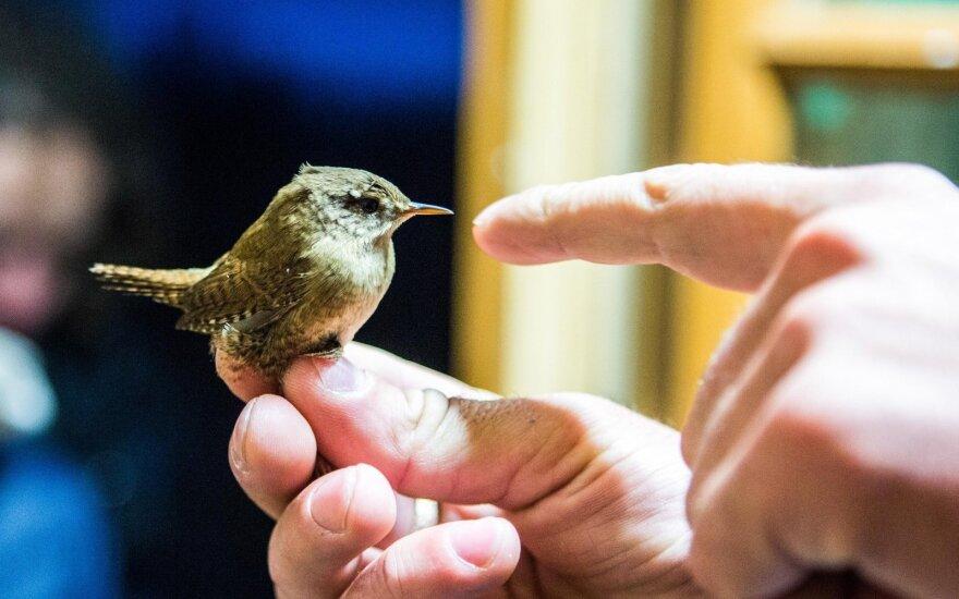 Ką daryti, jei paukštis atsitrenkė į jūsų namo langą