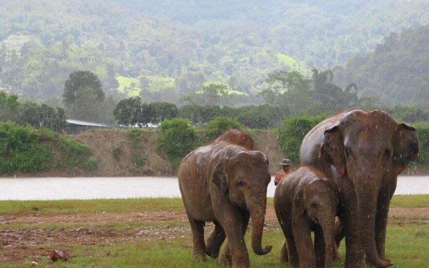 Savanorystė Tailande atvėrė akis: džiaugsmą pakeitė liūdesys ir ašaros