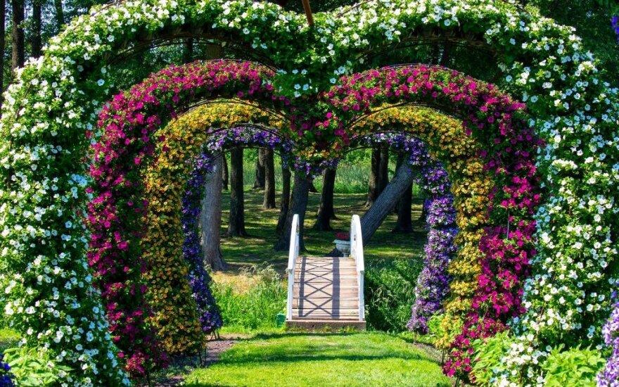 """Gėlių festivalis """"Vasarvidžio nakties sapnas 2020"""""""