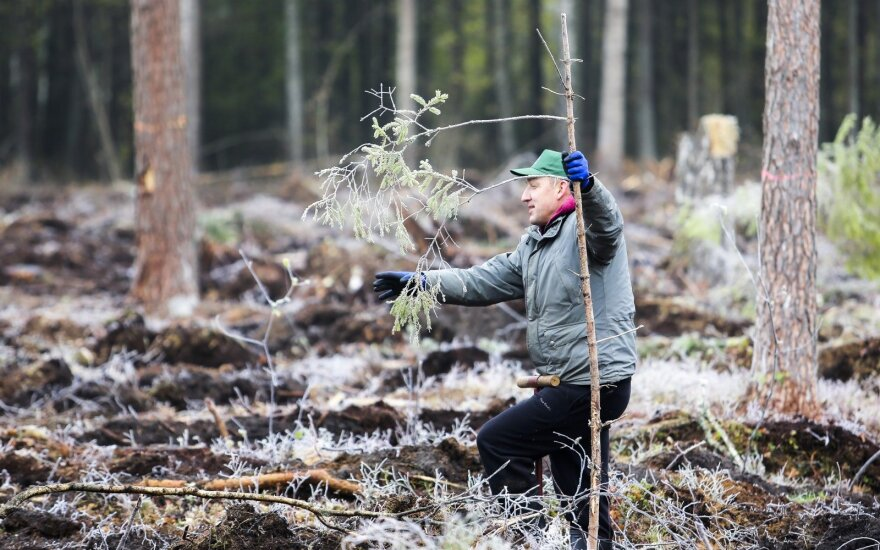"""""""Švedijos verslo apdovanojimų"""" CO2 emisijoms kompensuoti – 1 tūkst. medelių"""