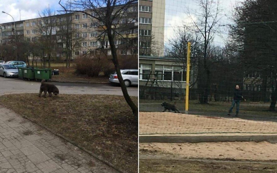 Prie daugiabučių namų ir vaikų žaidimų aikštelėje paleidęs didelį šunį, šeimininkas kaltas nesijautė