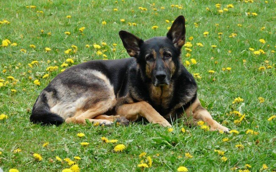 Po brangaus augintinio mirties kankina mintys apie veterinarų profesionalumą