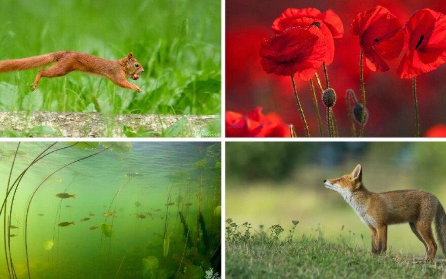 Gamtos dienoraštis