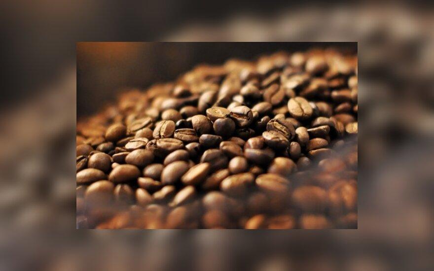 Atšilimas kelia paniką kavos augintojams