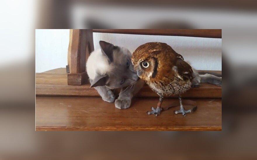 Pelėda ir katė