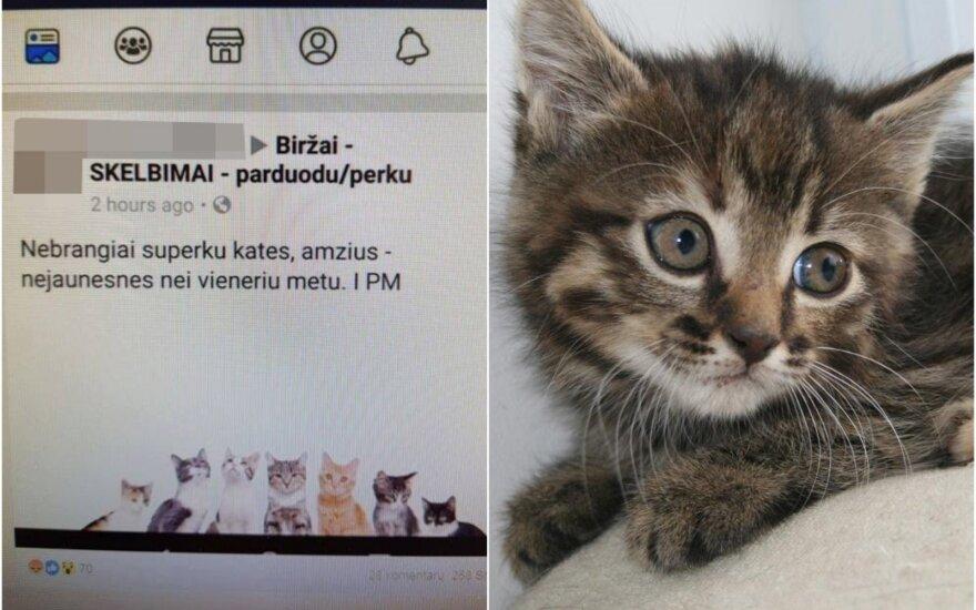 Supirkinėjamos katės