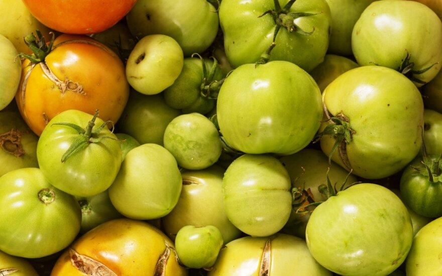 Kaip laikyti žalius pomidorus, kad jie greičiau sunoktų