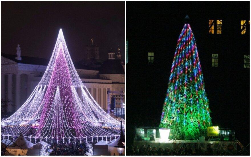 Vilniaus ir Kauno eglės