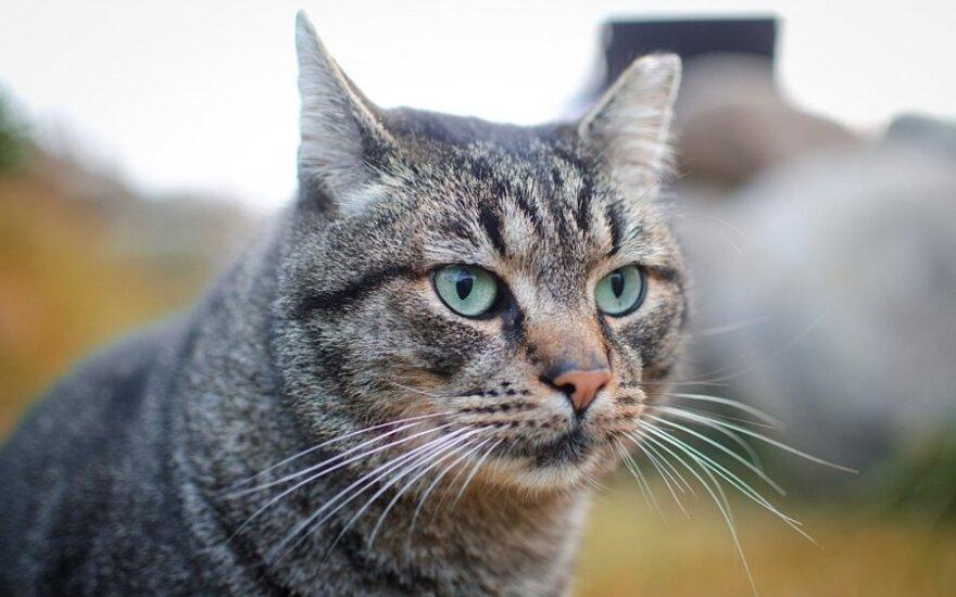 Didžiausias šeimininkės įžeidimas katinui – trukdyti jo planus ir miegą